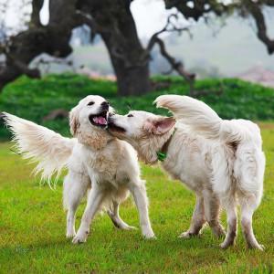dog playdate